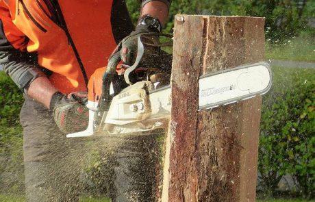 כריתת עצים בגבעת שמואל – כמה זה עולה ומה צריך לדעת?
