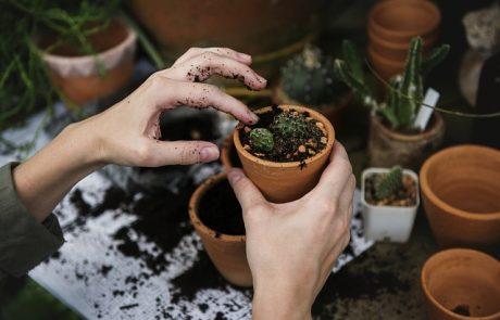 רוצים לטפח את הגינה? כך תעשו זאת בקלות!
