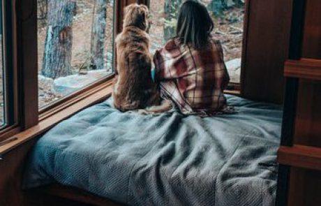צימרים בצפון עם כלבים – צאו לחופשה עם החבר הכי טוב שלכם!